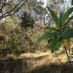 bushland areas ought to be made accessible to both locals and eco tourism.