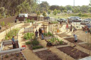 Campbelltown Community Garden