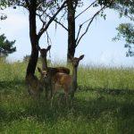 Seen any wild deer around?