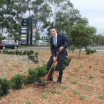 Mayor George Brticevic puts the finishing touches to the roundabout on the intersection of Gilchrist Drive and Therry Road.
