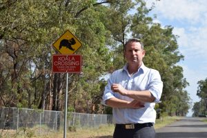 MP Greg Warren says new state strategy offers nothing to our disease free koala colony.